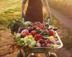 fermier legume