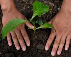Gigantul alimentar Nestlé se implică și mai mult în sprijinirea tranziției către un sistem alimentar regenerativ