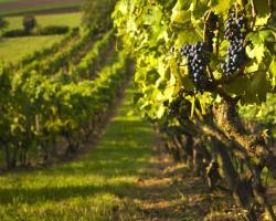 Serbia importuri vin